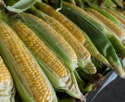 Farm Kids Mini Farmers – Corny Corn